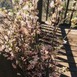 春が楽しみ